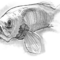 another fish