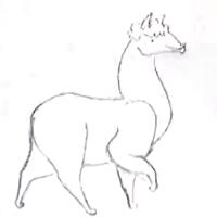 llama sketch