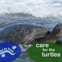 Care for Turtles