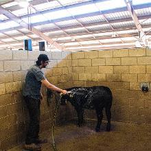 Washing Mt. SAC Farm Animal