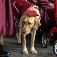 Dog Grad