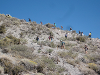 Students hiking mountain switchbacks