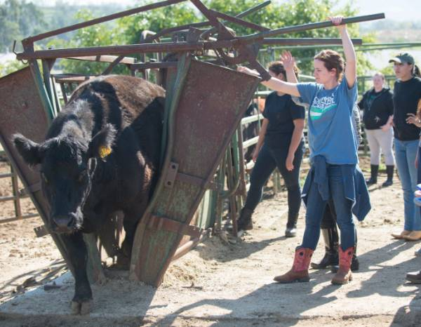 Mt. SAC classes provide practical, hands-on experience, such as in this animal science class.